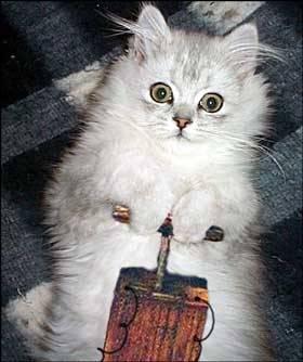 cat-detonator.jpg