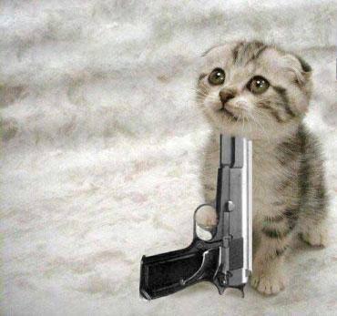 cat & gun-704528.jpg