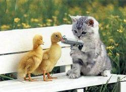 cat_ducks.jpg