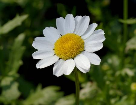 flower?.jpg