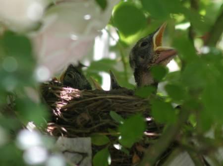 494-Babybirds.jpg