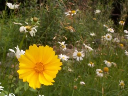 Some_wildflowers._:).jpg